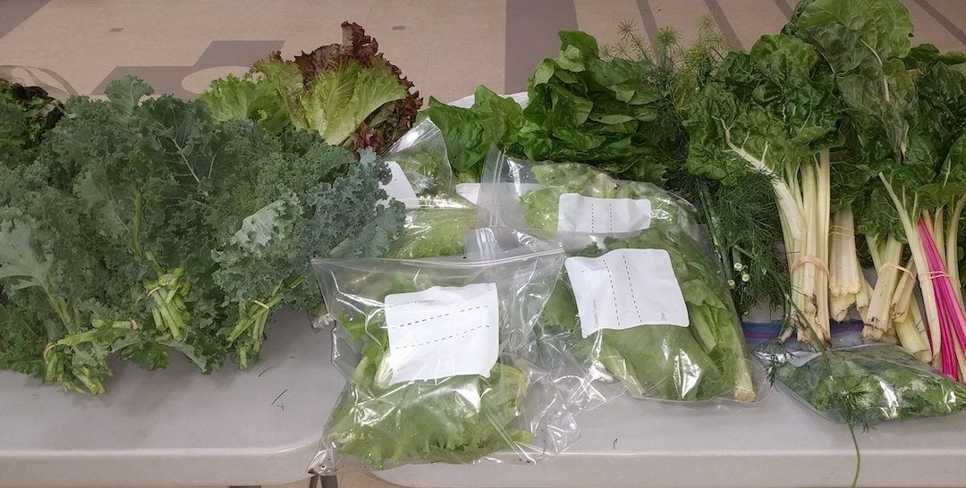 A Generous August Harvest