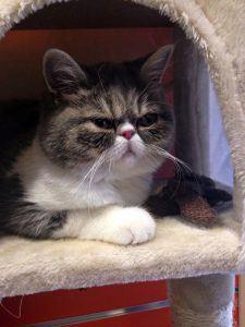Grumpy Cat- Jamie Depledge