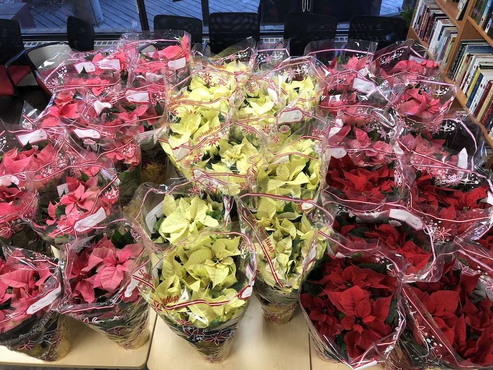St. Andrew's Poinsettias for Seniors